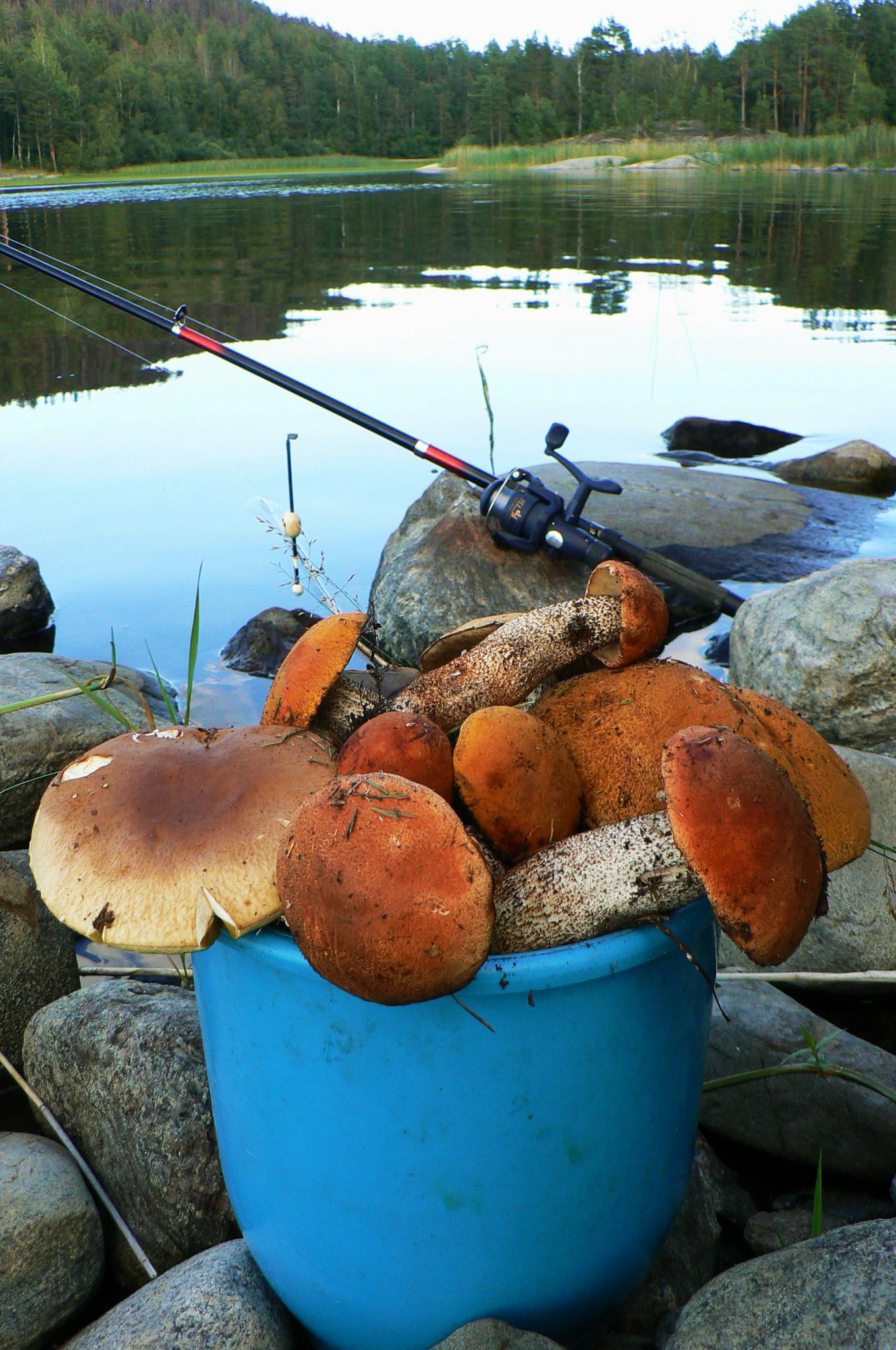 Название: грибная охота.JPG Просмотров: 2010  Размер: 663.6 Кб