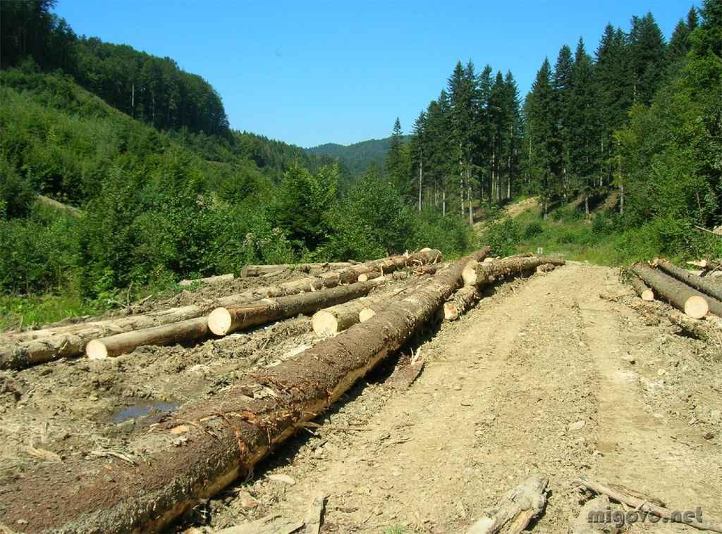 Название: вырубка в лесу.jpg Просмотров: 1240  Размер: 110.4 Кб