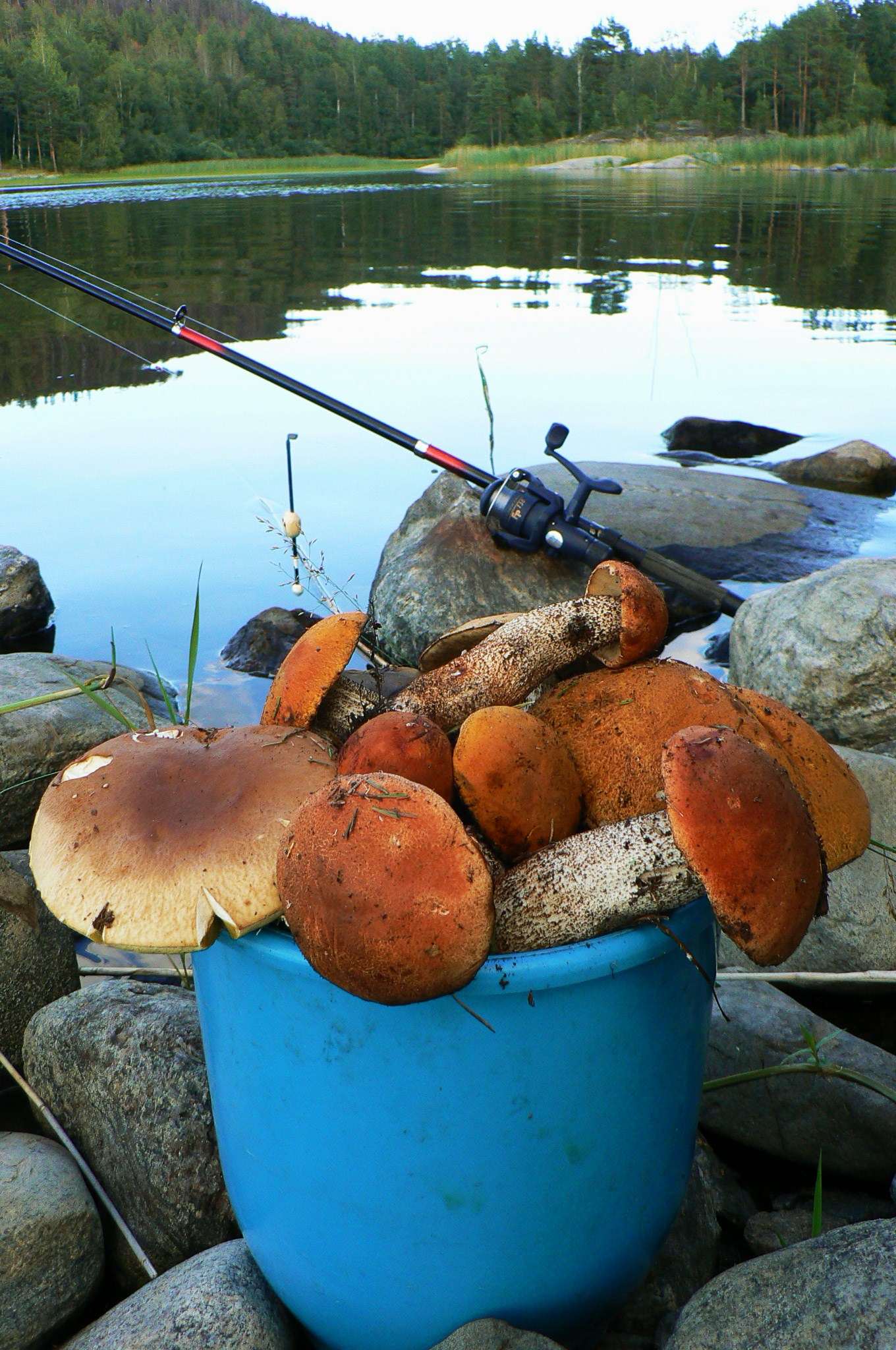 Название: грибная охота.JPG Просмотров: 2012  Размер: 663.6 Кб