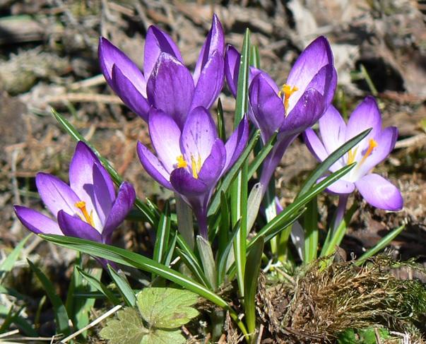 Название: аленький цветочек.jpg Просмотров: 128  Размер: 148.6 Кб