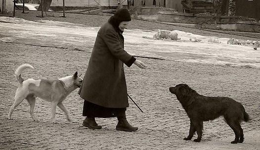 Название: собачье угощение.jpg Просмотров: 152  Размер: 79.8 Кб
